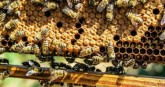 Adulterated honey being sold in India, fake sugar