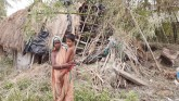 Indigenous peoples in Sundarbans ruined by lockdow