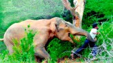 Conflict between humans and animals increased, mor