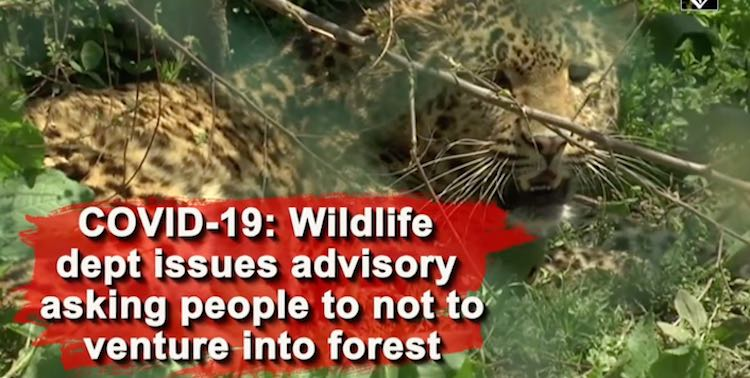 COVID-19: Wildlife Department Issues Advisory In J