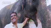 Two Elephants Turn Millionaires As Bihar Man Gives