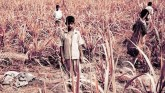Maximum child laborers in Gujarat