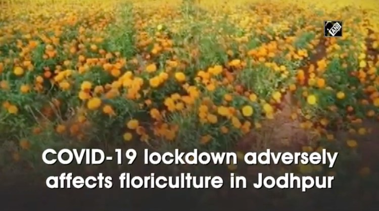 COVID-19 Lockdown Hits Floriculture