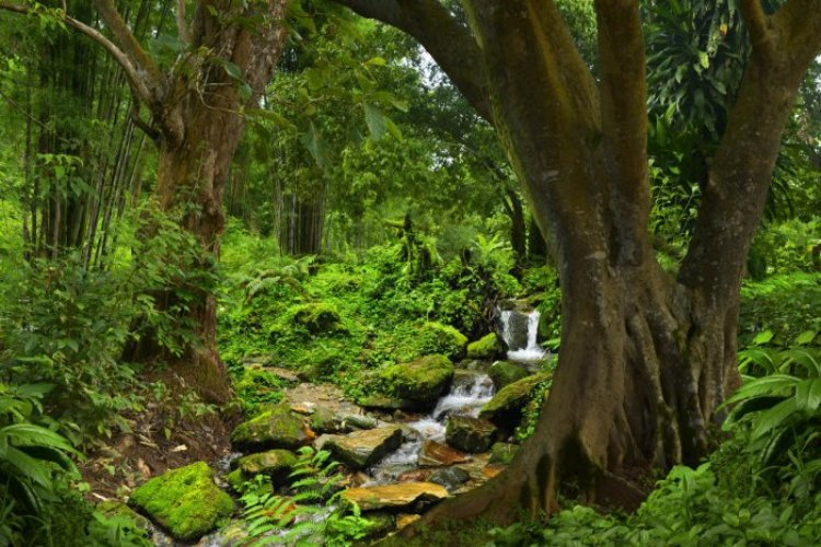 The Ground Reality of forests in India