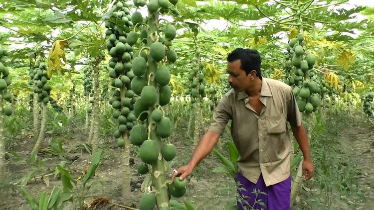 Fruit farmers are suffering because of falling pri