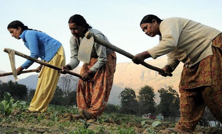 Ownership of women on agricultural land increased