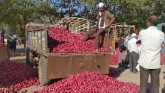 Central government imposes ban on onion exports, e