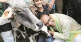 Budget cuts for cows in MP, only 1 rupee 55 paise