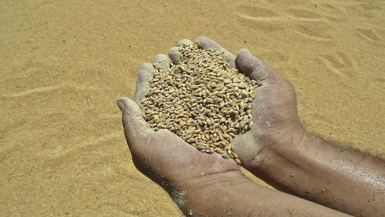 MP Farmer Dies In Queue For Selling Wheat Produce