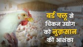 The news of bird flu has caused fever to the chick